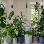 5 گیاه آپارتمانی که میتوانند خواب شما را بهتر کنند!